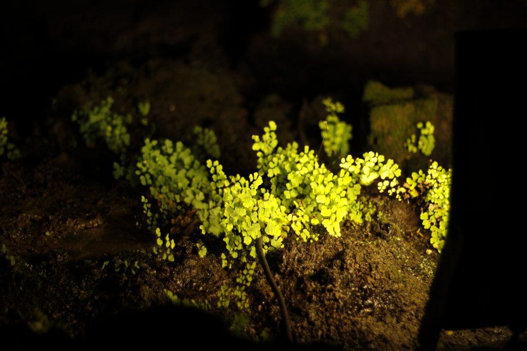 Planter i mørket