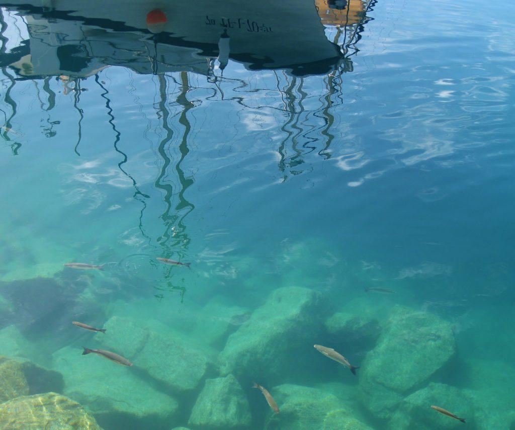 Fisk inne i havnen