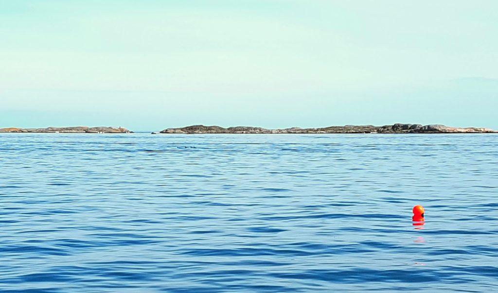 Stille hav